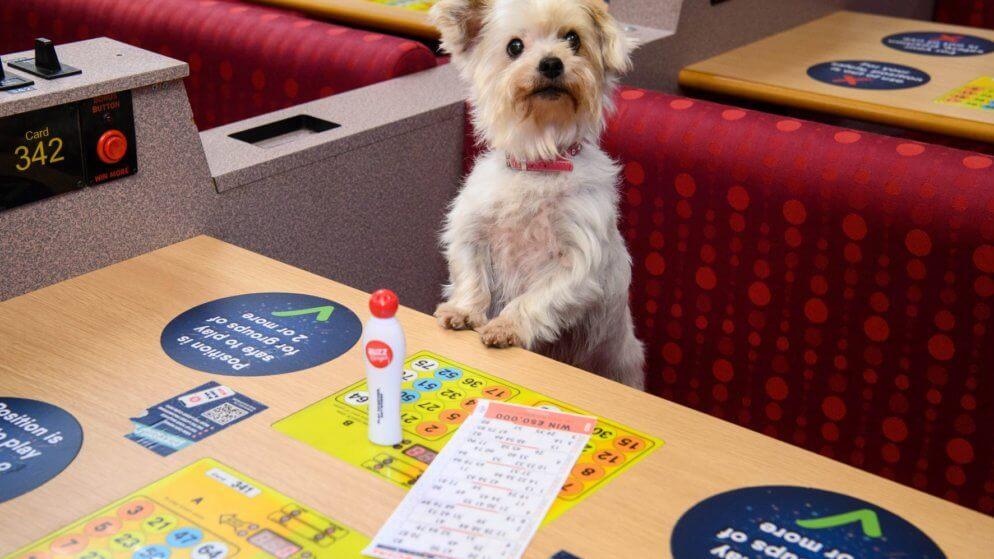 Buzz Bingo Trials First Ever Dog Bingo